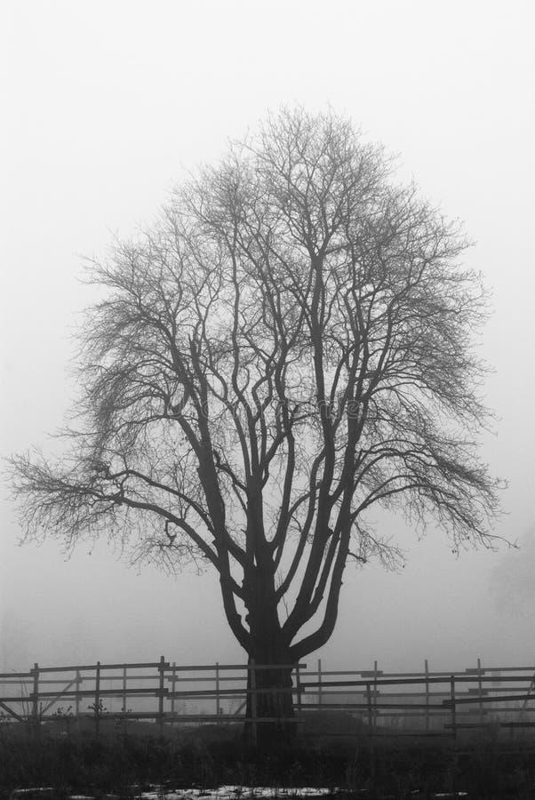 Árbol espeluznante imagenes de archivo