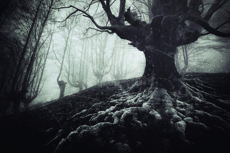 Árbol espeluznante con las raíces torcidas y las texturas sucias imagenes de archivo