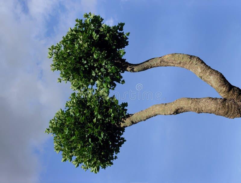 Árbol extraño foto de archivo