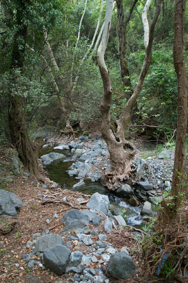 Árbol extraño en un bosque foto de archivo