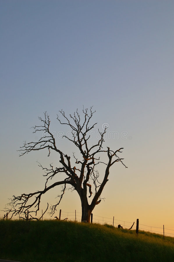 Árbol fantasmagórico foto de archivo