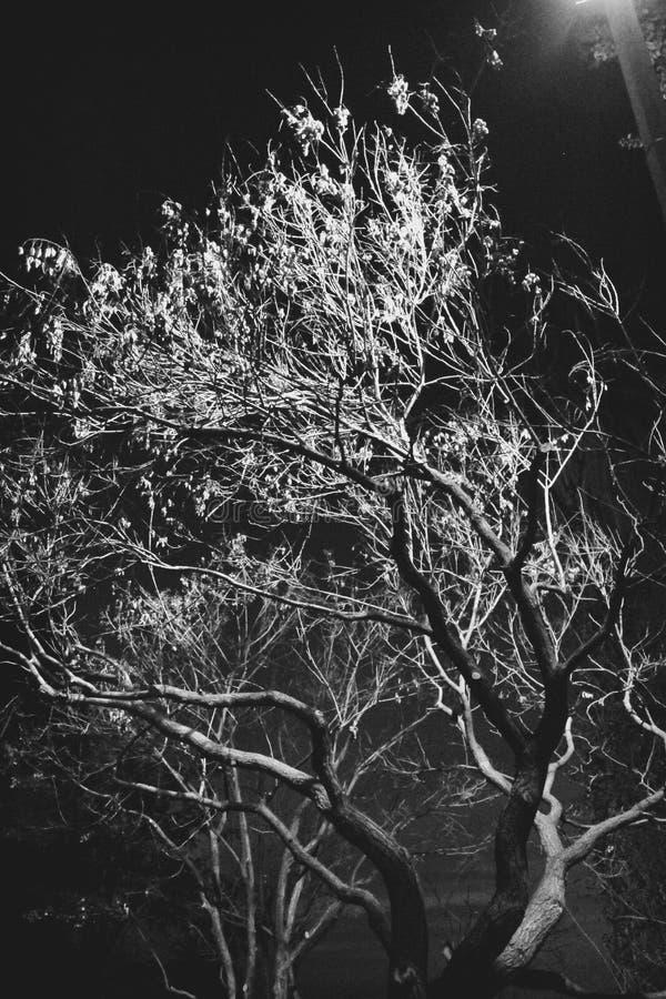 Árbol fantasmagórico fotos de archivo