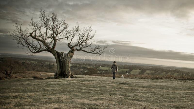 Árbol fantasmagórico con la hembra solitaria imagen de archivo libre de regalías