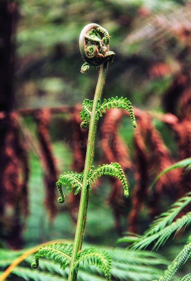 Árbol Fern Frond imagen de archivo libre de regalías