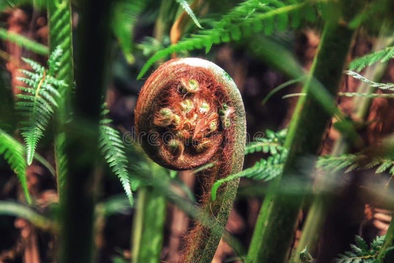 Árbol Fern Frond imagen de archivo