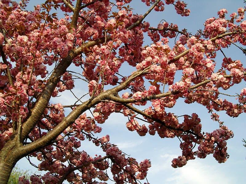 árbol floreciente