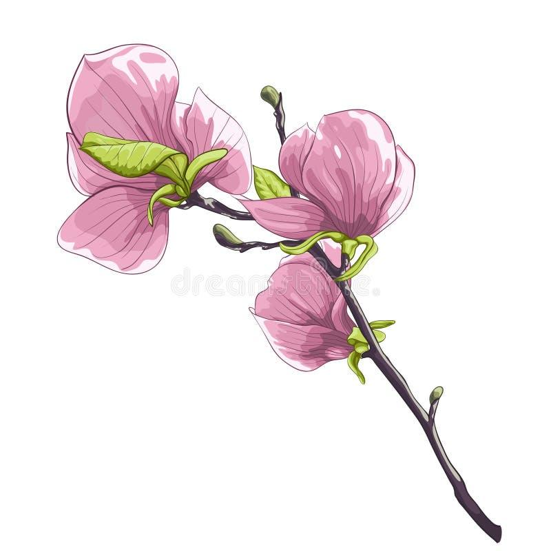 Árbol floreciente aislado hermoso de la magnolia de la ramita ilustración del vector