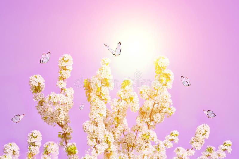 Árbol floreciente con las flores en la sol de la mañana Foco suave Fondo del flor de la primavera Copie el espacio imagen de archivo libre de regalías