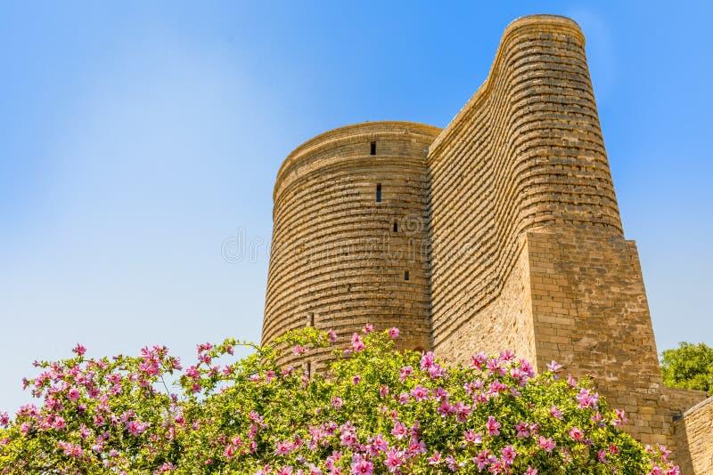 Árbol floreciente con las flores rosadas y la torre virginal medieval de Gız Galası, ciudad vieja, Baku, Azerbaijan fotos de archivo libres de regalías