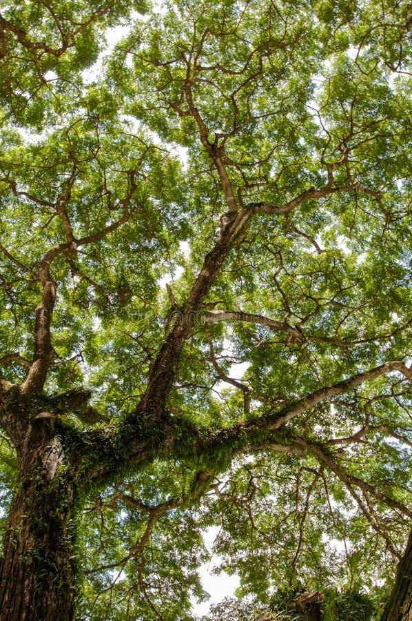 Árbol forestal de la selva luz del sol de madera verde de la naturaleza imagen de archivo libre de regalías