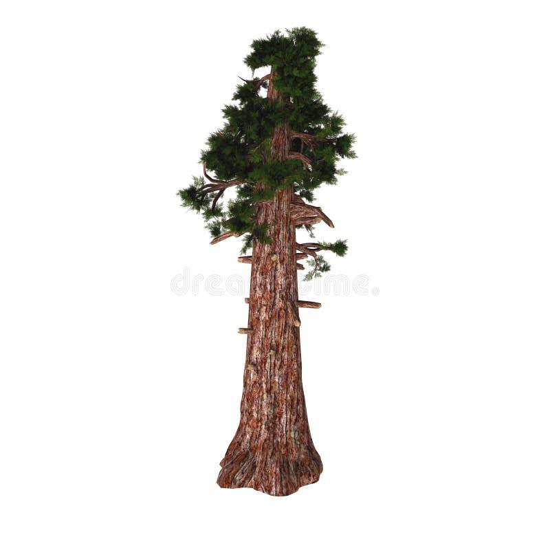 Árbol gigante de la secoya ilustración del vector