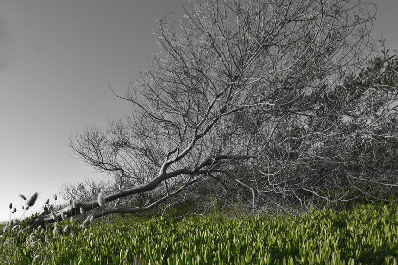 Árbol golpeado abajo por el viento fotos de archivo libres de regalías