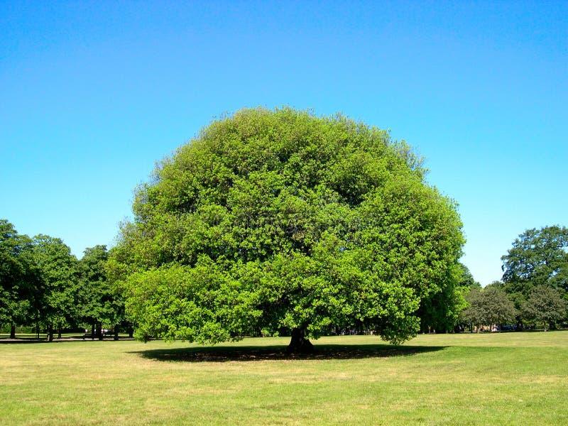 Árbol grande fotografía de archivo