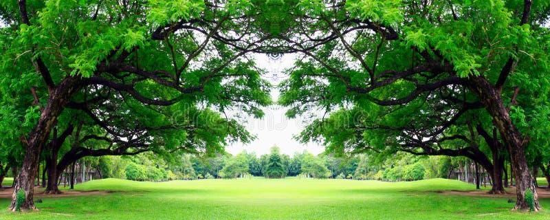 Download Árbol grande foto de archivo. Imagen de travieso, belleza - 41903046