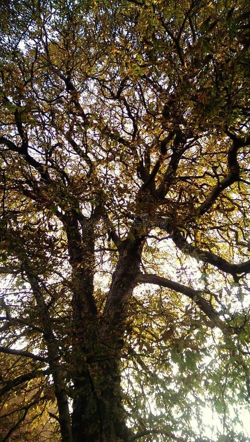 Download Árbol grande imagen de archivo. Imagen de otoño, árbol - 44855721