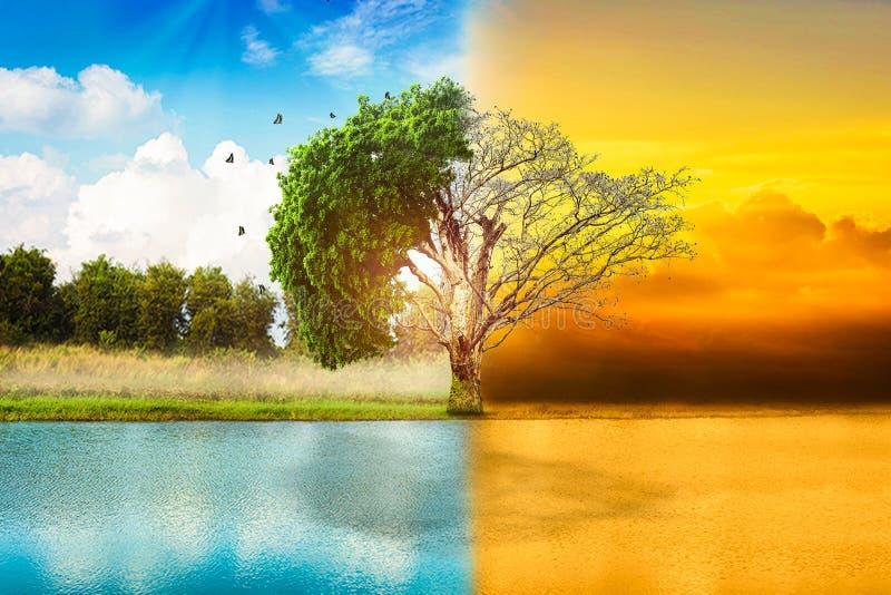 Árbol grande ambiental de los conceptos, vivo y muerto fotografía de archivo libre de regalías