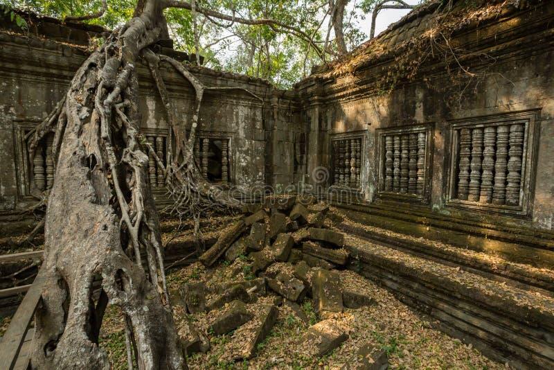 Árbol grande de Beng Mealea imágenes de archivo libres de regalías