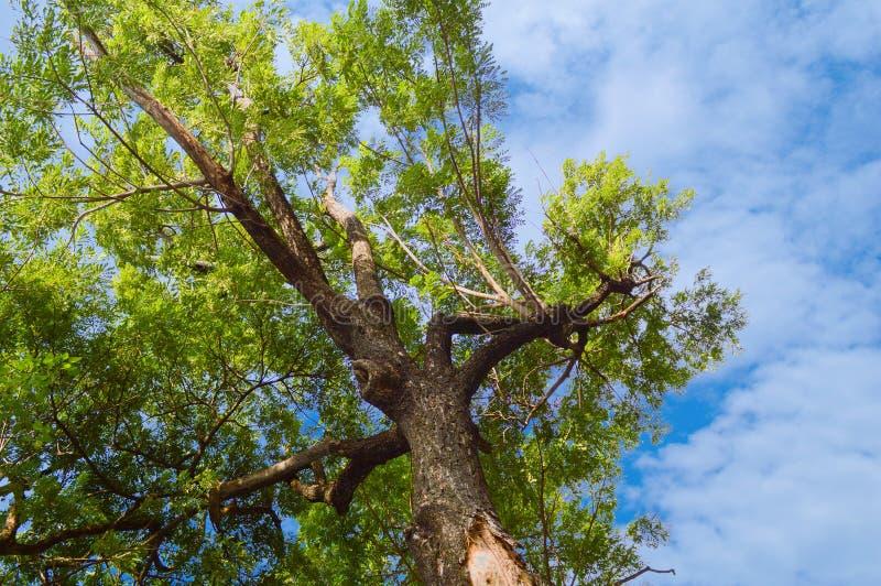 Árbol grande de la rama en jardín de la naturaleza fotografía de archivo libre de regalías