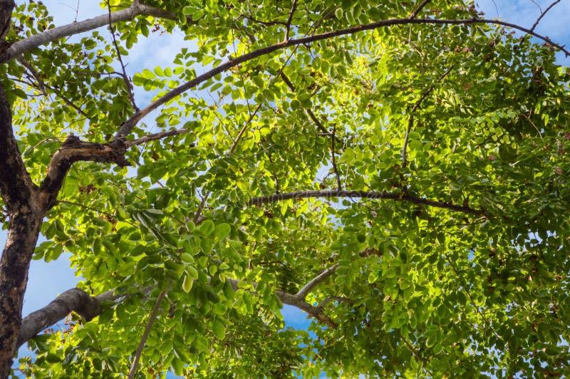 Árbol grande de la rama en jardín de la naturaleza imagen de archivo libre de regalías