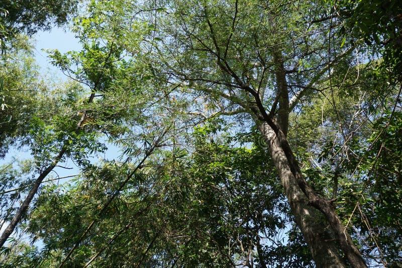 Árbol grande de la rama en jardín de la naturaleza imágenes de archivo libres de regalías