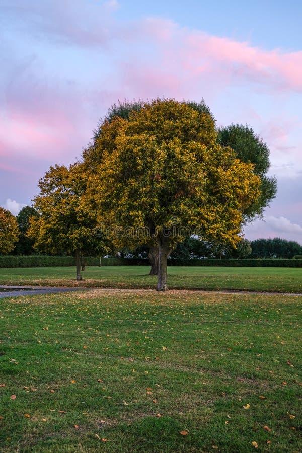 Árbol grande del otoño en la última hora de la tarde en octubre fotos de archivo libres de regalías