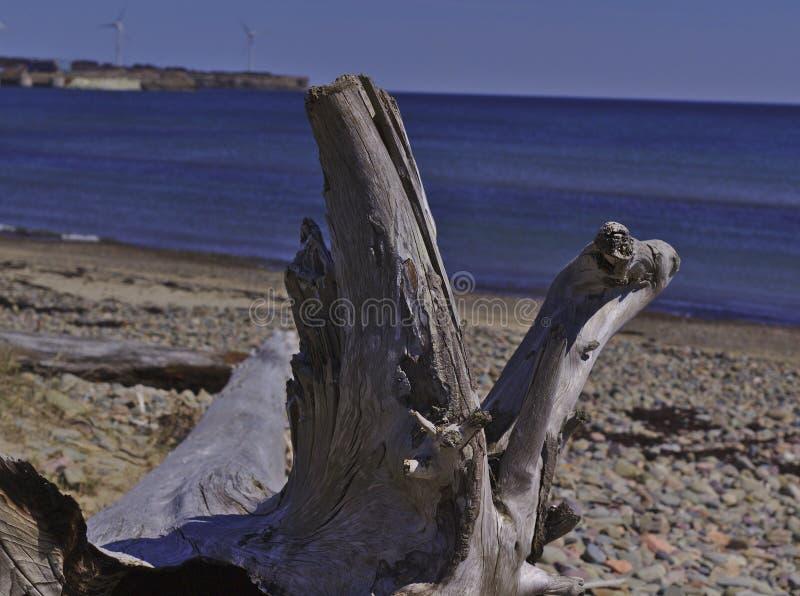 Árbol grande en la playa 3519 fotografía de archivo