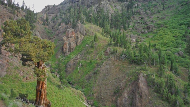 Árbol grande y rastro que pasan a través de un valle imagen de archivo