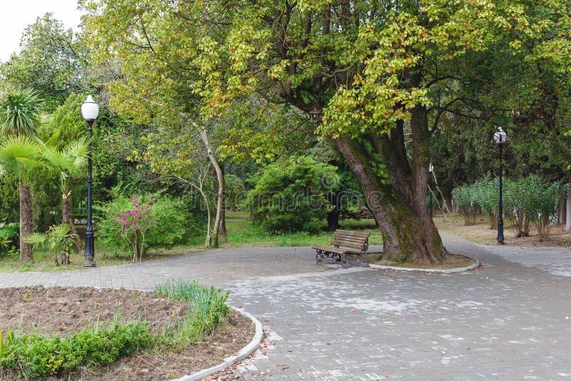 Árbol grande y un banco en el parque fotos de archivo libres de regalías