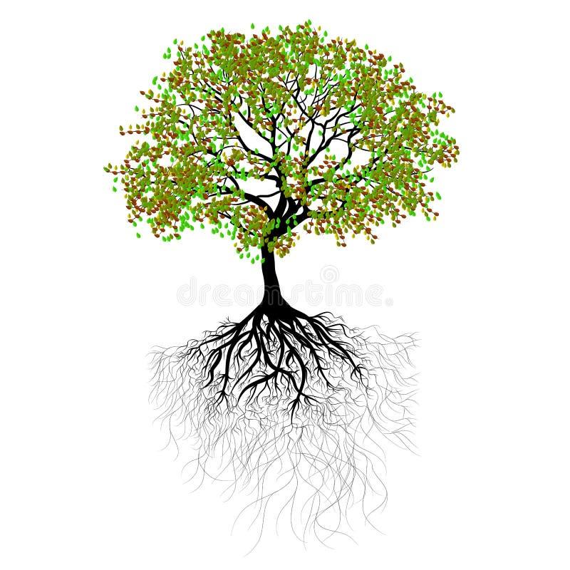 Árbol hermoso imagenes de archivo