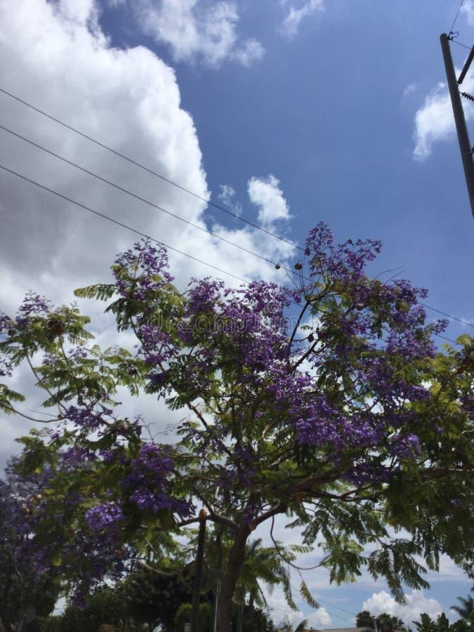 Árbol hermoso con las flores púrpuras imagen de archivo