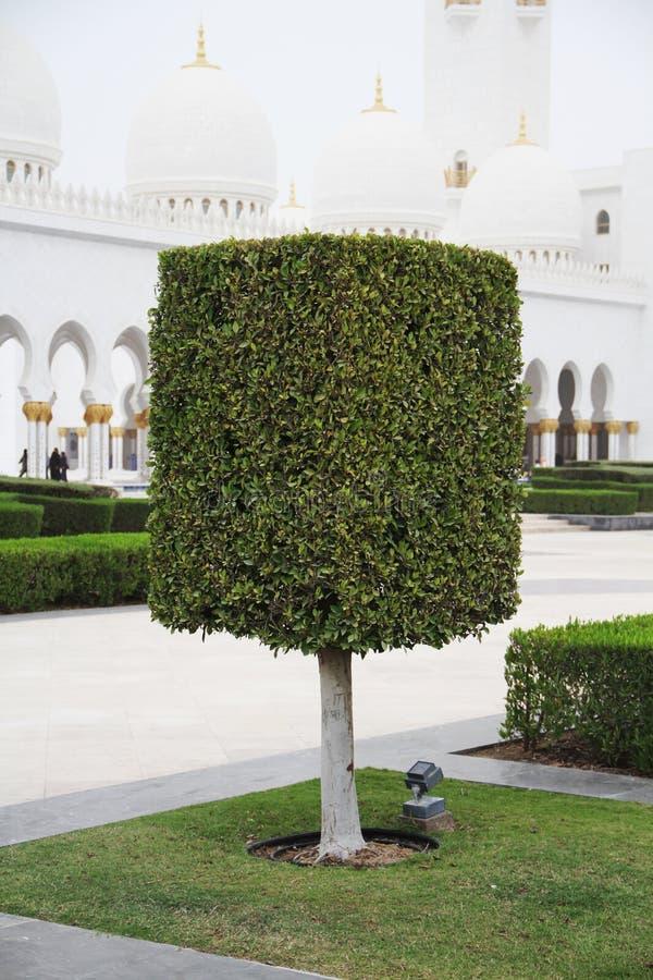 Árbol hermoso del cuadrado en Dubai imagen de archivo libre de regalías