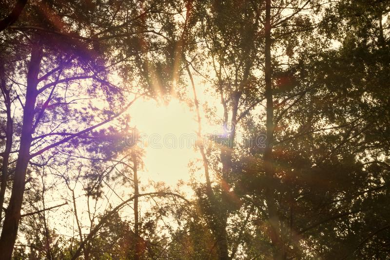 Árbol hermoso en el campo de hierba y la luz del sol entre sus ramas y hojas Paisaje del VERANO fotos de archivo