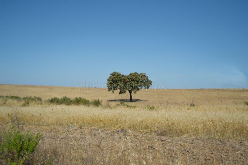 Árbol hermoso en medio de la nada en Portugal del sur imagenes de archivo