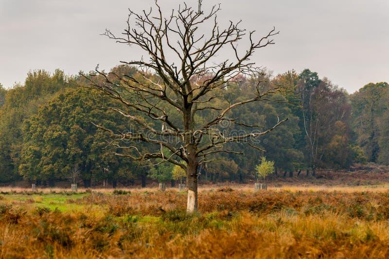 Árbol hermoso en otoño fotos de archivo