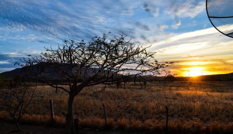 Árbol hermoso especial con las ramas secas en puesta del sol con las cercas de la granja fotografía de archivo libre de regalías