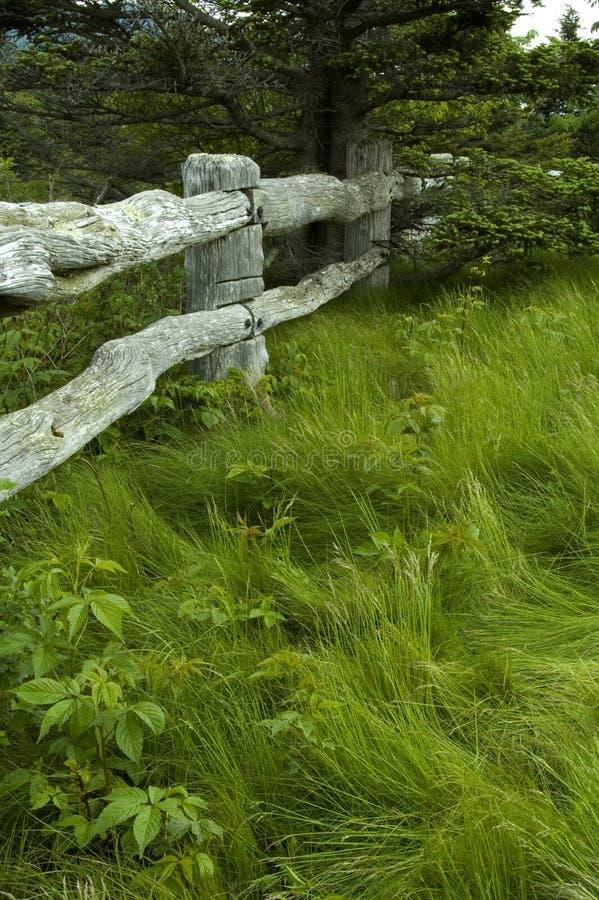 Árbol, hierba, cerca de madera fotografía de archivo