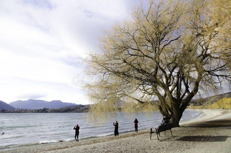 Árbol imponente del otoño cerca del lago hermoso con el fondo de la montaña en la isla del sur, Nueva Zelanda imagen de archivo