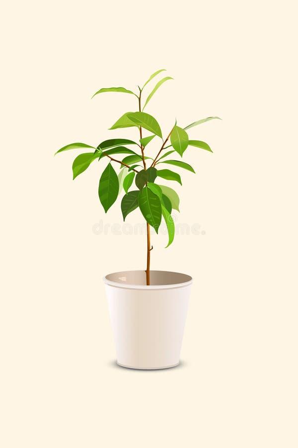 Árbol joven en pote ilustración del vector