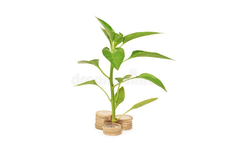 Árbol joven que crece de la pila de monedas foto de archivo