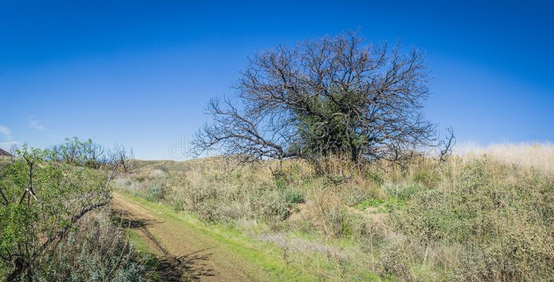 Árbol a lo largo del rastro en el desierto de California meridional imagen de archivo libre de regalías