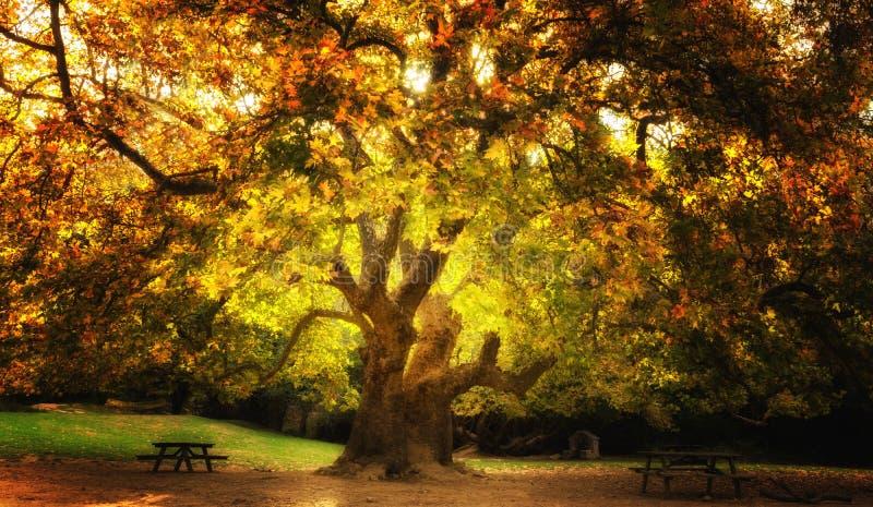Árbol mágico foto de archivo libre de regalías