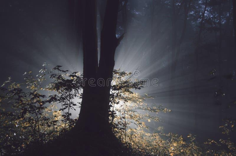 Árbol mágico en bosque misterioso el la noche de Halloween fotos de archivo