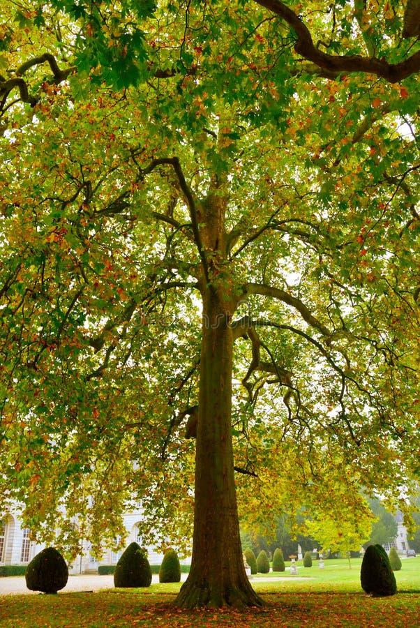 Download Árbol magnífico del otoño imagen de archivo. Imagen de cubo - 7289151