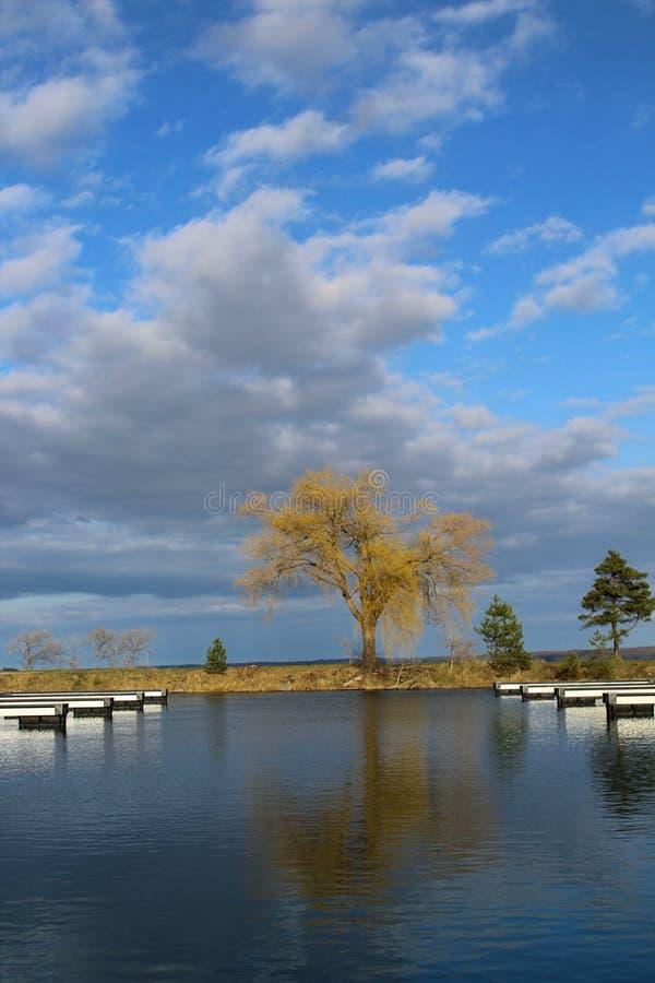 Árbol maravilloso en el lago fotos de archivo