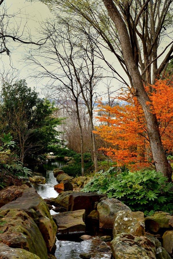 Árbol marchitado invierno en un parque imagen de archivo