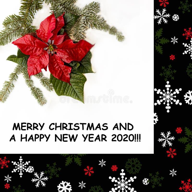 Árbol matural rojo de la poinsetia y del abeto en el fondo blanco Capítulo en negro con los ornamentos de la nieve y de la Navida imágenes de archivo libres de regalías