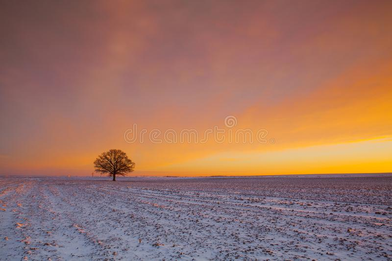Árbol memorable en el campo por la mañana escarchada fotos de archivo libres de regalías