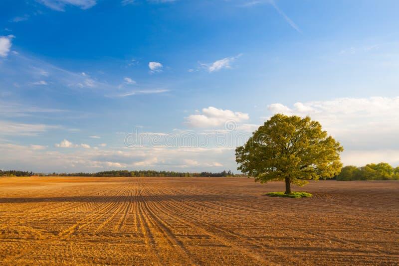 Árbol memorable en el campo vacío imagen de archivo