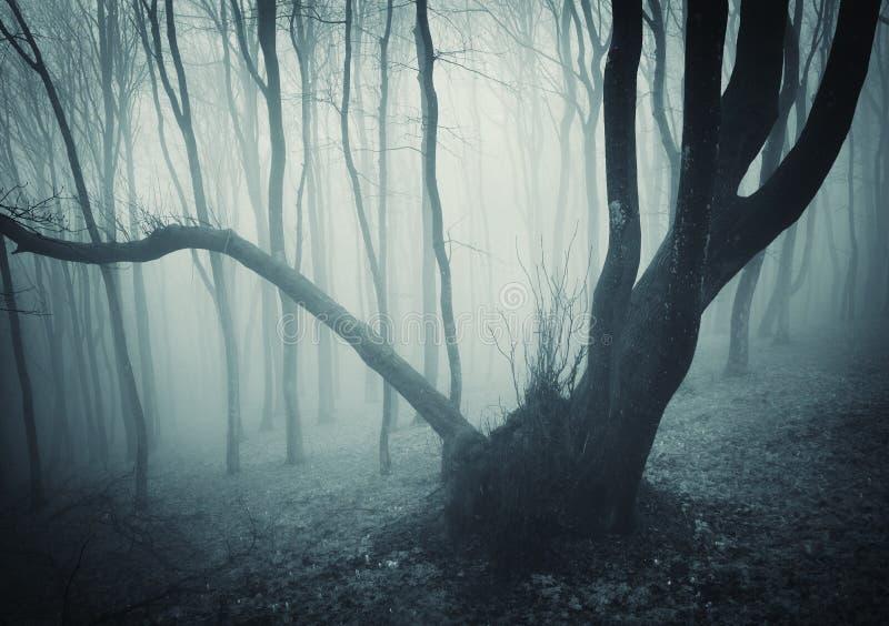 Árbol misterioso viejo en un bosque oscuro imágenes de archivo libres de regalías