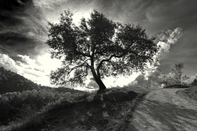 Árbol monocromático aislado imagenes de archivo